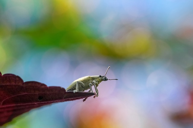 Insect, Bug, Macro, Animal, Nature, Wildlife, Colors