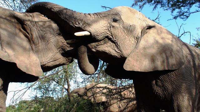 Elephants, Animals, Mammals, Sharing Water, Macro