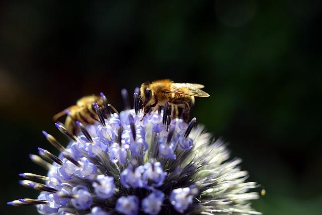 Macro, Diestel, Bee, Purple