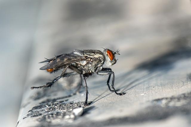 Fly, Macro, Insect, Bug, Closeup