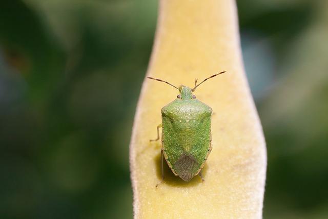 Bug, Leaf Bug, Green, Insect, Insecta, Animal, Macro