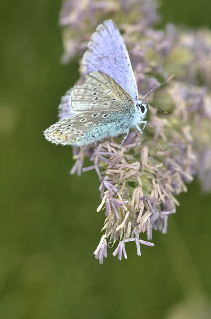 Butterfly, Macro, Insect, Bugs, Butterflies