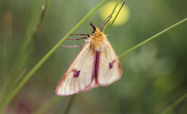 Butterfly, Night, Butterflies, A Moth, Macro, Beautiful