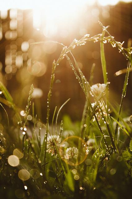 Bokeh, Grass, Rings, Flare, Lensflare, Macro, Close Up