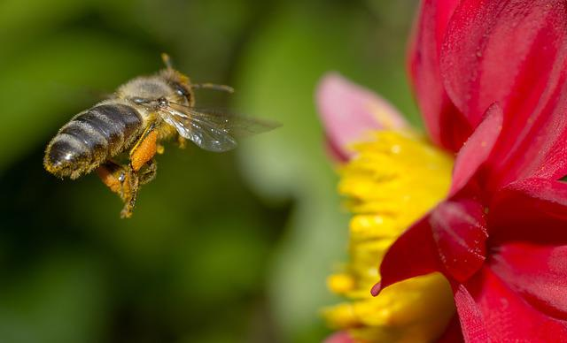 Bee, Nature, Flower, Macro, Closeup, The Bees At Work