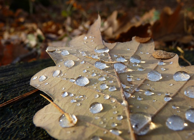 Leaf, Autumn, Drop Of Water, Dew, Oak Leaf, Macro