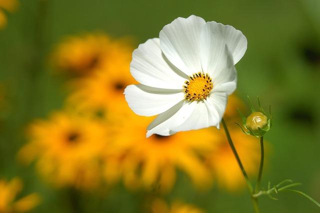 Flower, Macro, Nature, Bud