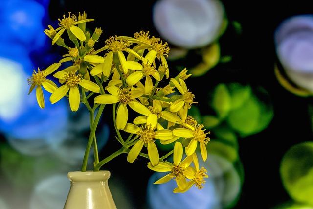 Flower, Nature, Plant, Yellow, Flora, Garden, Macro
