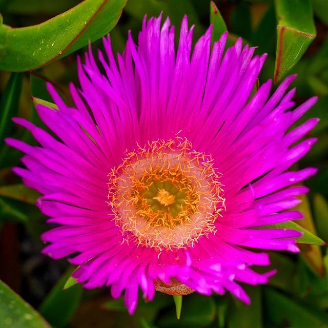 Plant, Nature, Flower, Garden, Flowers, Macro