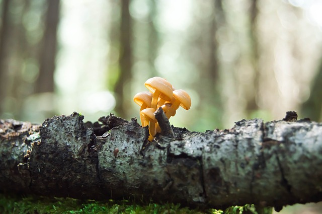 Fungi, Forest, Macro, Nature