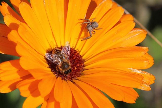 Macro, Honey Bee, Garden