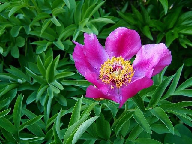 Flower, Macro, Flowering, Green