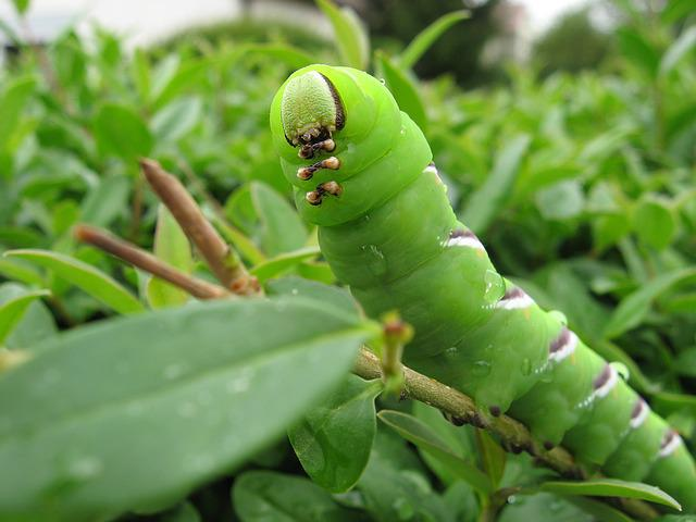 Macro, Caterpillar, Head, Green, Nature, Butterfly