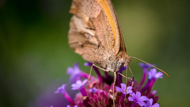 Butterfly, Insect, Macro, Close, Animal, Color, Nature