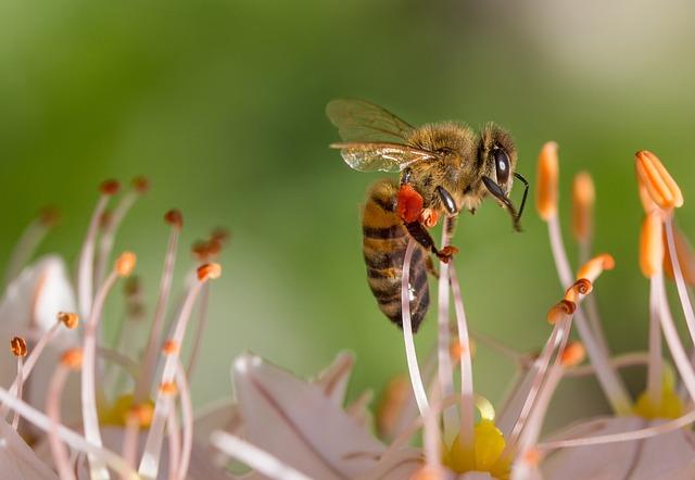 Bee, Spring, Flower, Macro, Nature, Garden, Insect