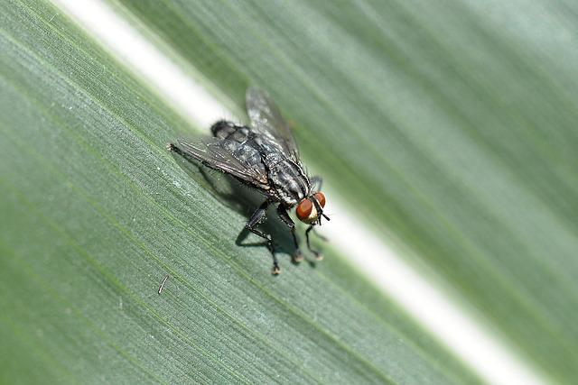 Fly, Insect, Macro, Leaf