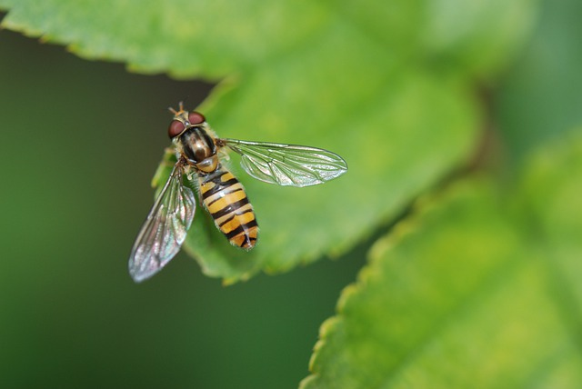 Animal, Wasp, Insect, Nature, Macro, Leaf