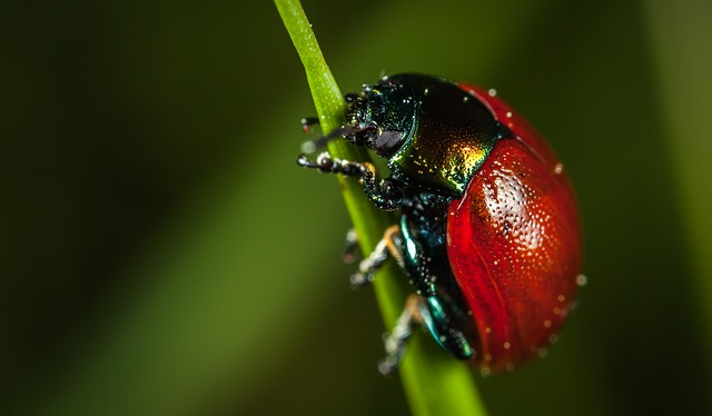 Nature, No One, Insect, Beetle, Living Nature, Macro