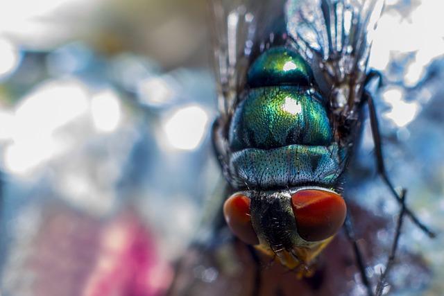 Fly, Macro, Macro Photo, Macro Photography