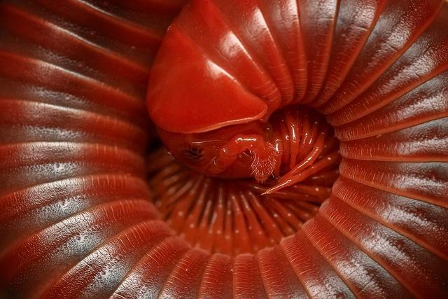 Millipede, Diplopoda, Macro, Arthropod, Close, Animal