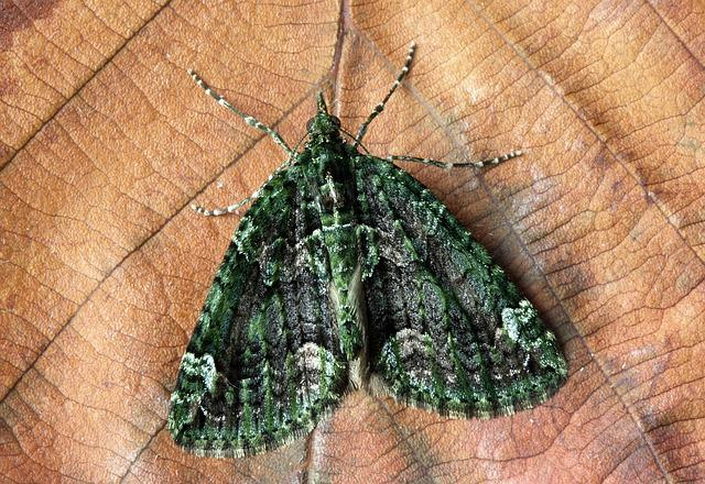 Moth, Macro, Insect, Close, Wing, Green