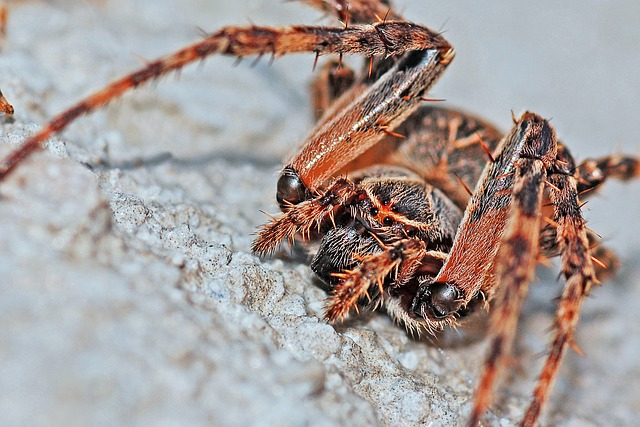 Spider, Arachnid, Macro, Insect, Nature, Animal, Bug