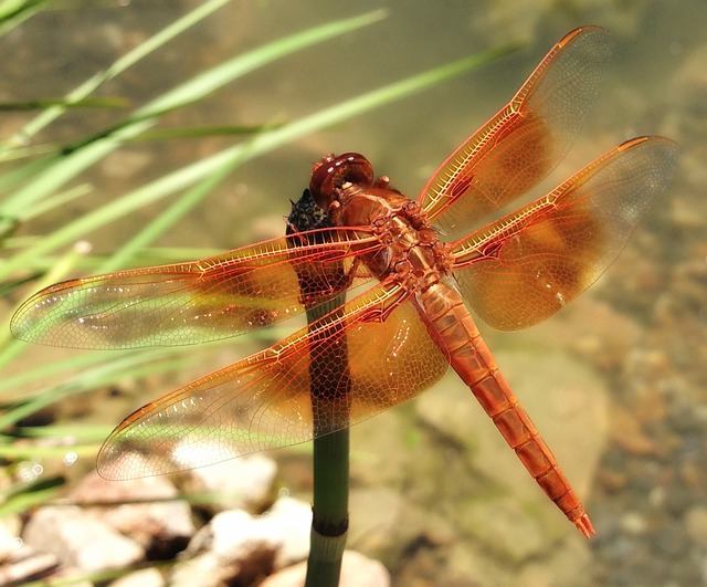 Dragonfly, Insect, Nature, Outside, Macro, Close-up