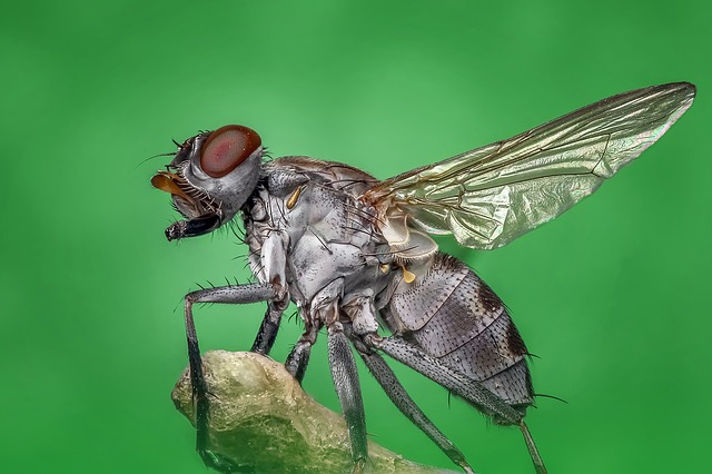 Housefly, Fly, Macro, Insect, Nature, Pest, Bug, Eye