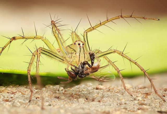 Spider, Insect, Macro, Nature, Arachnid