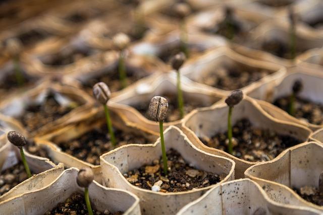 Macro, Nursery, Plants, Seedlings, Sprouts