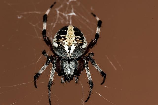 Spider, Insect, Macro, Nature, Outside, Cobweb
