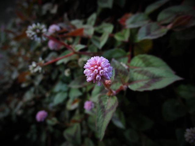 Flower, Wild Flower, Wild, Nature, Plant, Macro, Petals