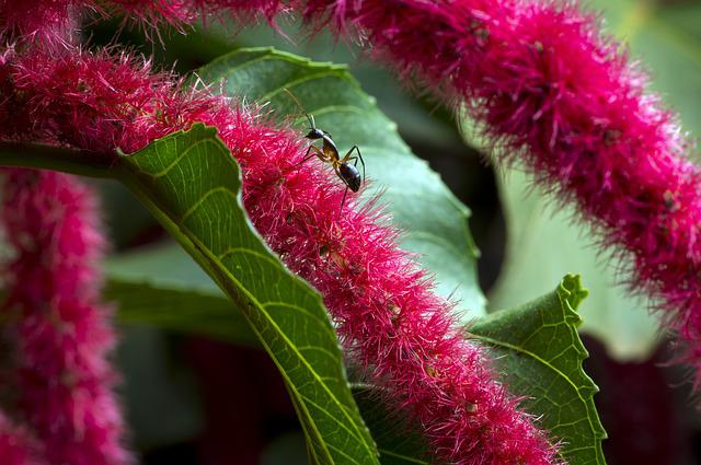 African Flower, Macro Photography, Blossom, Ant