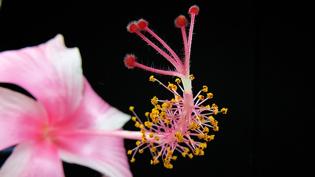 Blossom, Bloom, Pink, Macro