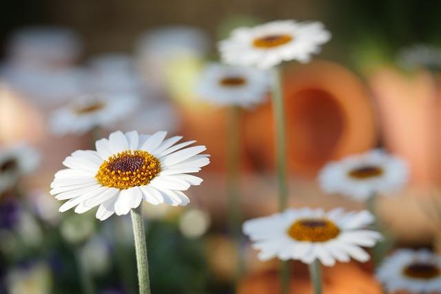 Nature, Flower, Plant, Spring, Flowers, Close, Macro