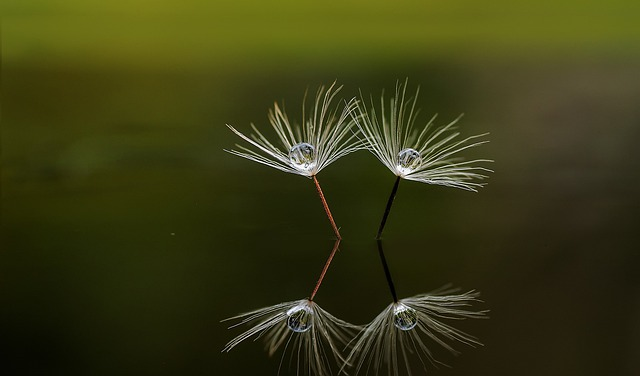 Macro, Nature, Reflection, Beautiful, Reflections