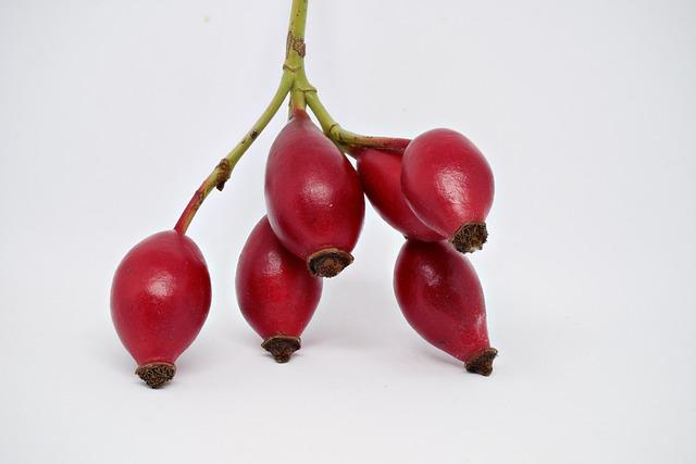 Rose Hip, Wild Rose, Autumn, Rosehip Seed, Macro