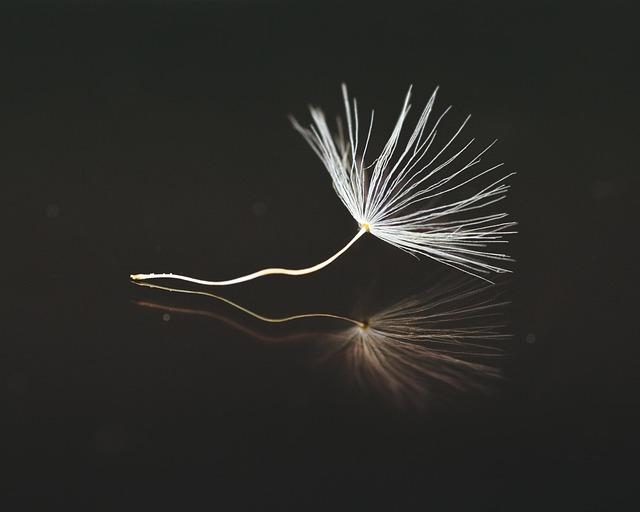 Seeds, Dandelion, Umbrella, Close Up, Macro