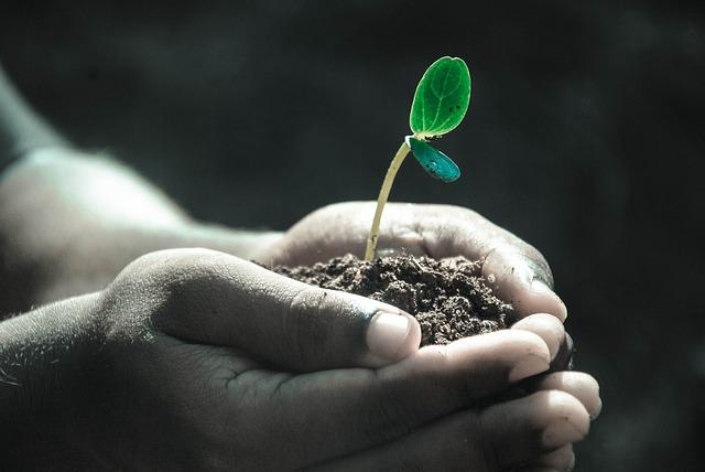 Hands, Macro, Plant, Soil