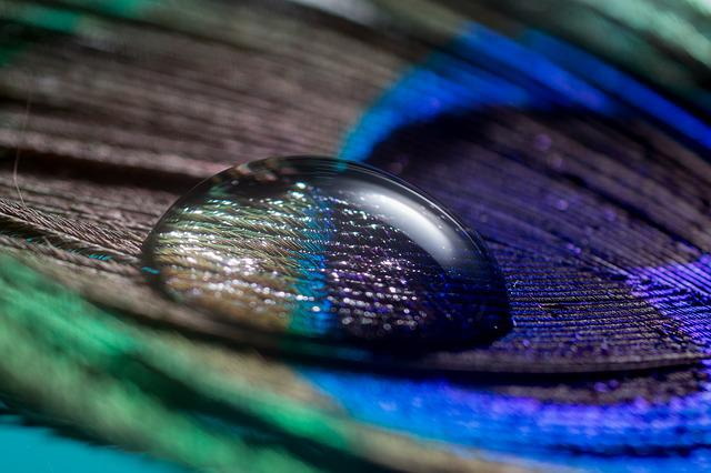 Peacock Feather, Spring, Drip, Macro, Nahaufmahme