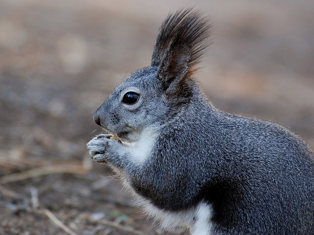 Squirrel, Animal, Close-up, Macro, Nature, Outside