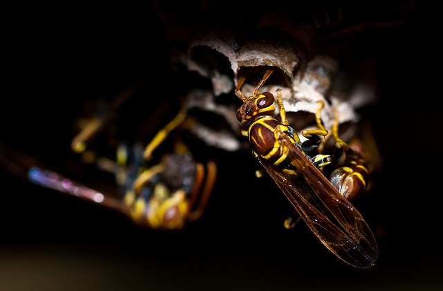 Wasp, Insect, Animal, Nature, Macro, Bee, Honey, Wasps