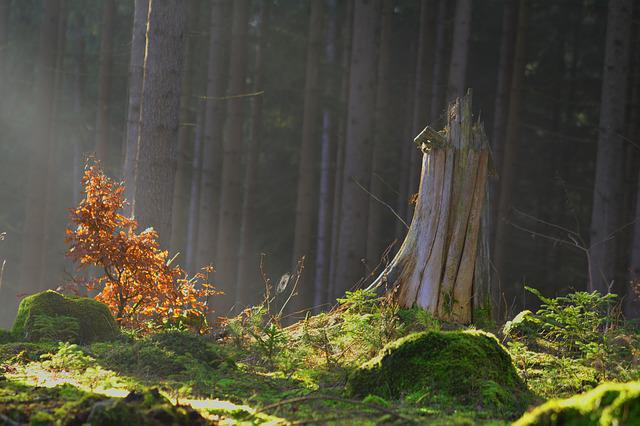 Magic Forest, Forest, Fairy Tale Forest, Mystical, Moss