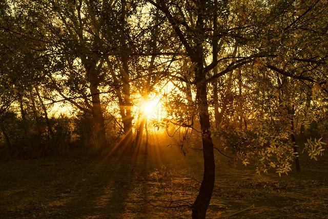 Magic Hour, Sunset, Forest, Tale, Evening Sun