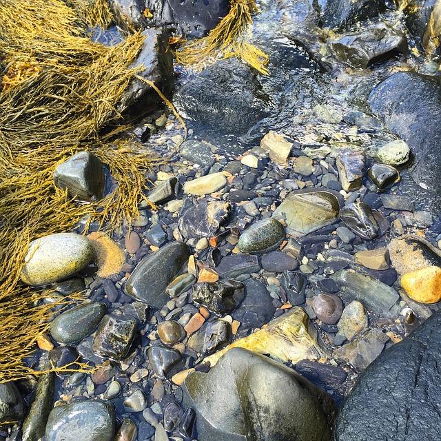 Rocks, Wet, Seaweed, Natural, Ocean, Maine, Marine