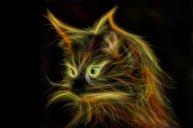 Cat, Light Painting, Mainecoon, Cat's Eyes