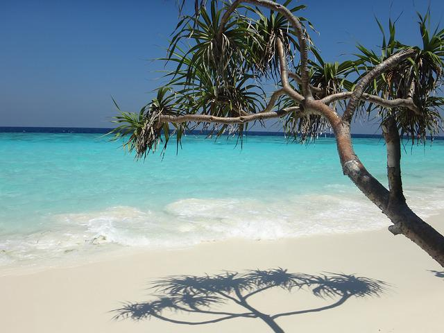 Maldives, Beach, Sea, Paradise, Palm