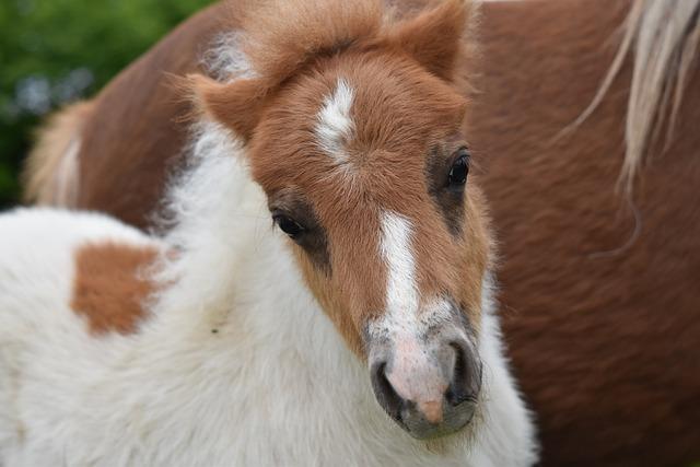 Foal, Shetland Pony, Pony Jarod, Male, Small Horse
