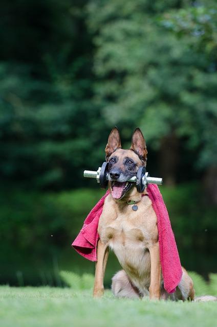 Trick, Dog Trick, Malinois, Dog Show Trick, Dog Tricks