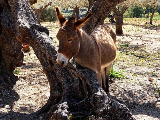 Donkey, Mediterranean, Mallorca, Rocky Coast